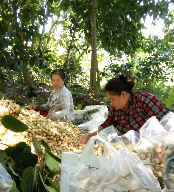 Hội Nông dân huyện Phong Điền tiếp sức hội viên vượt qua đại dịch